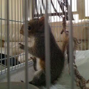 Baby-baby squirrel